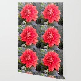 AUSTRIAN FLOWER Wallpaper