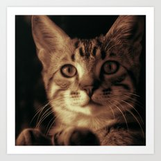 Kitten In The Window Art Print
