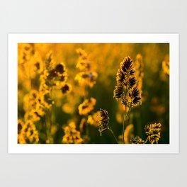 Field grasses in sparks of sunlight Art Print