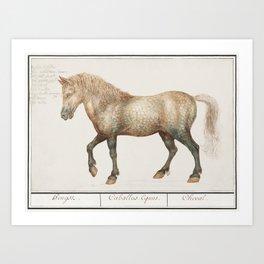 Horse Equus ferus caballus (1596-1610) by Anselmus Botius de Boodt Art Print