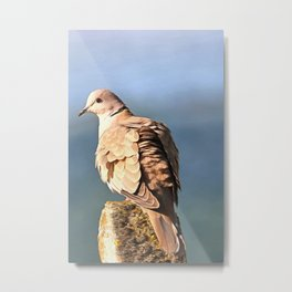Artistic Ring Necked Dove Metal Print