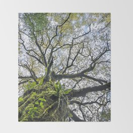 Centenary oak with the trunk covered in moss and green plants Throw Blanket