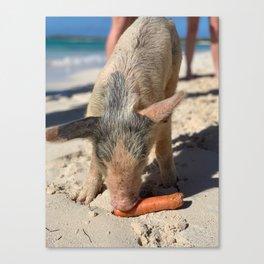 Bahamas Pig Canvas Print