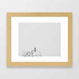 Kereru Chillin Framed Art Print