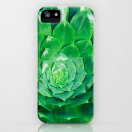 Botanical Gardens - Succulent #686 iPhone Case