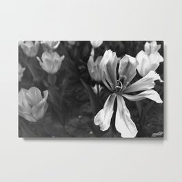 Distilled Nature Metal Print