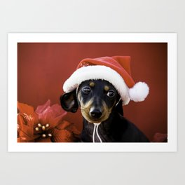 Christmas Dachshund Puppy Wearing a Santa Hat with Poinsettias Art Print