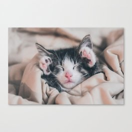 Paws Up For Naptime! Canvas Print