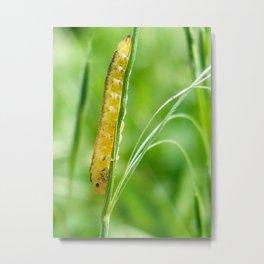 Magic Grass - Caterpillar - Macro Metal Print