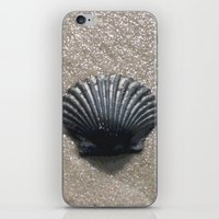 seashell iPhone & iPod Skins featuring Seashell by JMVasquez Photography