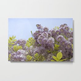 Lavender Wisteria with Apple Green Leaves and Powder Blue Sky Metal Print