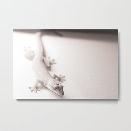 Gecko on a wall waiting for flies in Ho Chi Minh City, Vietnam  Metal Print