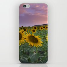 Sunflowers at pink sunset iPhone & iPod Skin