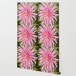 Rapturous Pink Dahlia Wallpaper