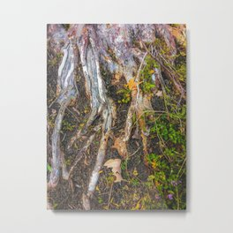tree roots with green leaves plant on the ground Metal Print