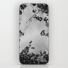spring black & white iPhone & iPod Skin
