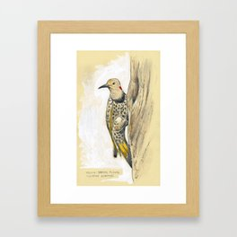 Yellow-shafted Flicker Framed Art Print