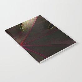 # 206 Notebook