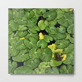 Frog on the Lily Pads Metal Print