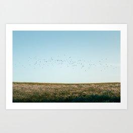 Flocking Birds At Sunset Art Print
