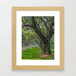 Avenue of Oaks Framed Art Print