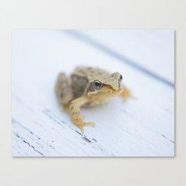 Little Frog Canvas Print