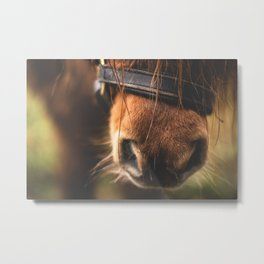 Soft Horse Nose Metal Print
