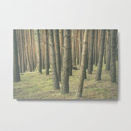 In the forest #10 Metal Print