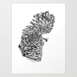 Black Cockatoo Portrait pen and ink Art Print