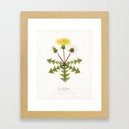 Dandelion Modern Botanical Framed Art Print