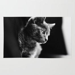 kitten looking up Rug