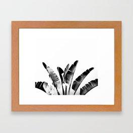 Traveler palm - bw Framed Art Print