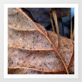 Autumn Leaves Macro Art Print