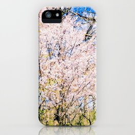 Blooming Trees In The Park On A Sunny Day Of Spring iPhone Case