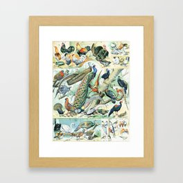 Vintage Illustration Bird Chart IV Framed Art Print