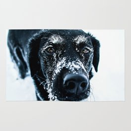 Snow Dog // Cross Country Skiing Black and White Animal Photography Winter Puppy Ice Fur Rug