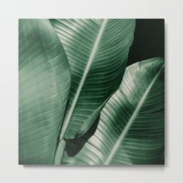 Banana leaf allure Metal Print