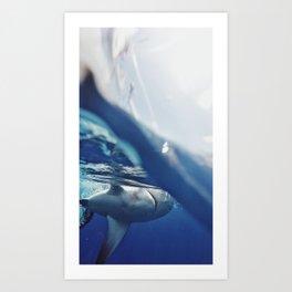 Shark on the Surface Art Print