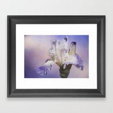 White Bearded Iris Framed Art Print