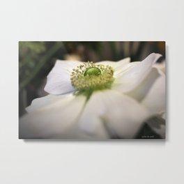 anemone #1 Metal Print