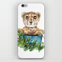 cheetah iPhone & iPod Skins featuring cheetah by Anna Shell