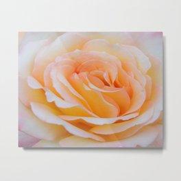Glorious Rose Metal Print