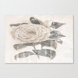 Vintage Camellia Canvas Print