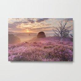 III - Blooming heather at sunrise, Posbank, The Netherlands Metal Print