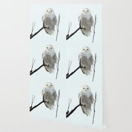 Snowy in the Wind (Snowy Owl 2) Wallpaper