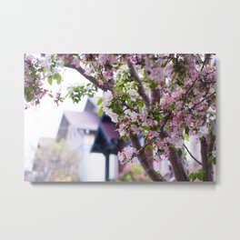 Apple Blossoms and Architecture Metal Print