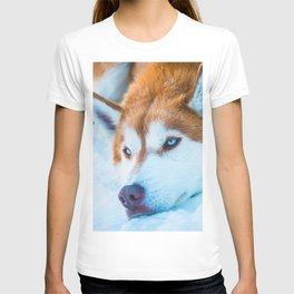 Sleepy Orange Siberian Husky (Color) T-shirt