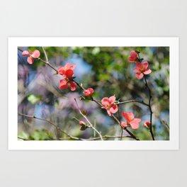 Spring Softness Art Print