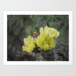 California Cactus Blooms Art Print