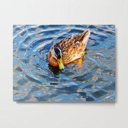 Swimming in Circles Metal Print